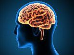 Human brains become 'old' at just 25, study finds
