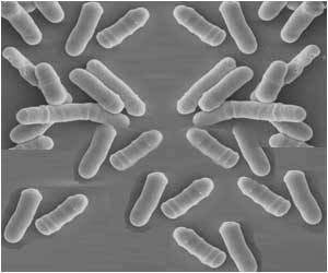 Probiotic Yeast May Help Treat Drug-resistant Fungal Infections