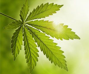 Cannabidiol Significantly Reduces Severe Epilepsy Seizures