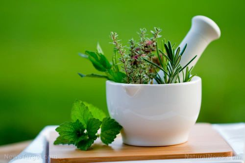 Herbal medicine has antiviral effects that effectively treat the flu