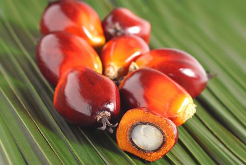 Palm fruit ingredient cuts diabetes, shows cognitive, gut benefits in rat model