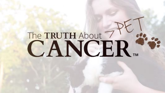 Each year, over 12 million dogs and cats are diagnosed with cancer. here's what you can do to SAVE them