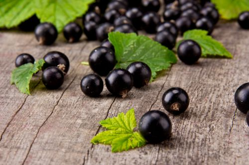 Meta-analysis supports sports performance benefits of NZ blackcurrants