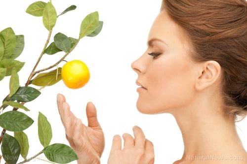 Your skincare routine could use myrcene: Studies reveal its anti-photoaging properties