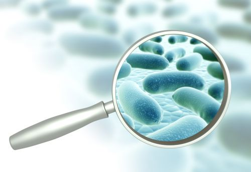 Viva 5 licenses NUtech Ventures' probiotic for new synbiotic product