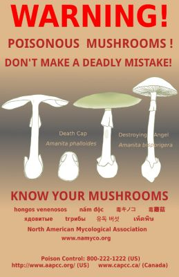 Death caps pose year-round threat to mushroom lovers