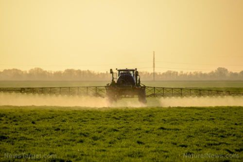 Exposure to glyphosate increases risk of cancer by more than 40%
