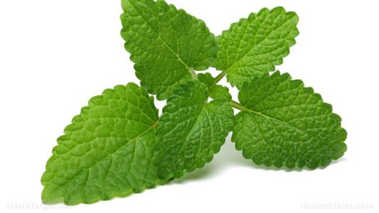 A blend of Mexican mint and oregano oil can treat multidrug-resistant bacteria: Study