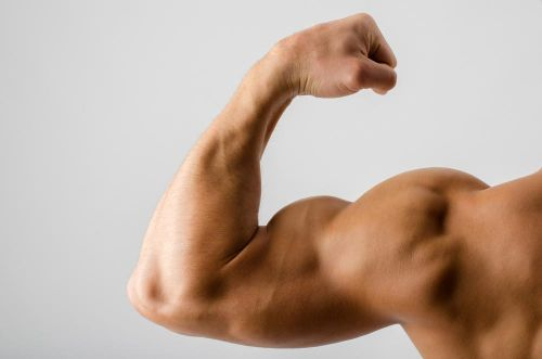 What Genetic Factors Determine the Shape of Your Muscles and How Strong They Are?