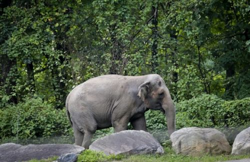 An Elephant's Personhood on Trial