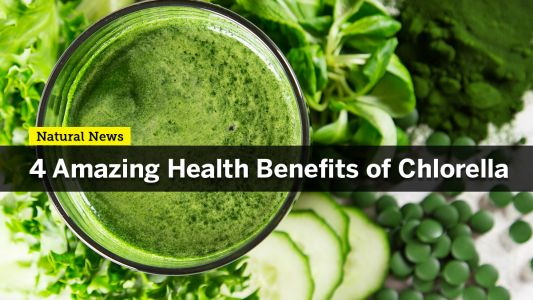 """Why you should start eating more Chlorella, """"Nature's Perfect Food"""""""