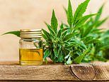 Medical cannabis may be harmful, MPs are told as drug trials show only 'moderate benefits'
