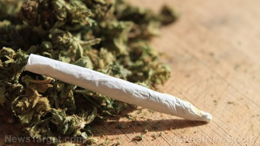 Smoking marijuana found to have the same weakening effect on the blood vessels as cigarettes