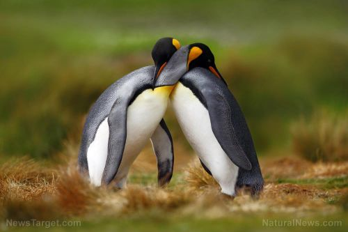 "Disgusting liberals manipulate ""gay"" penguins to push anti-science LGBT agenda"