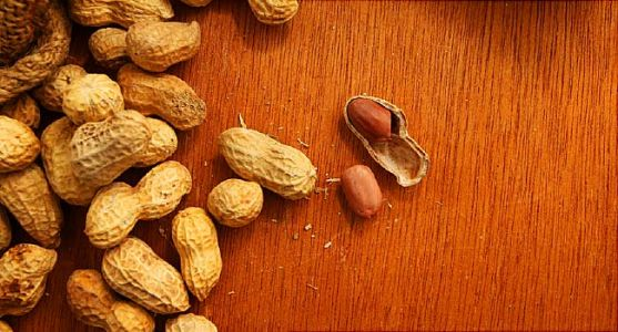 Experimental Injection May Block Peanut Allergy