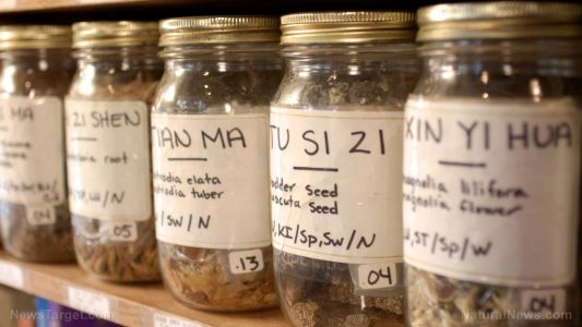 Herbs vs. pharmaceuticals: Understanding the effectiveness of natural medicine