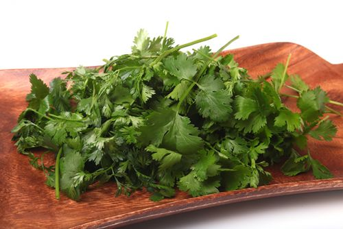 Researchers: Coriander oil is a safe and effective way to treat MRSA superbug infections