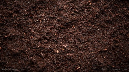 Organic fertilizer can be used to increase crop yield in plants grown in rotation