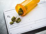 Doctors would prescribe marijuana to children with cancer