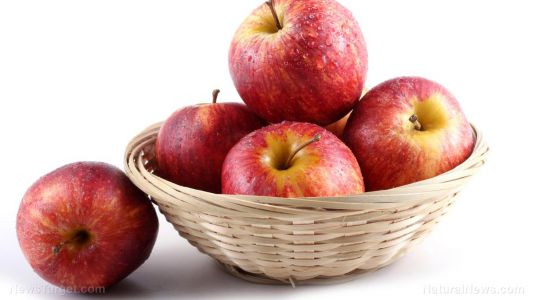 Apple extracts increase the excretion of cholesterol by an impressive 35% in healthy people