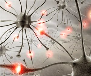 Only Excitatory Neurons Could Be Responsible For Alzheimer's Disease