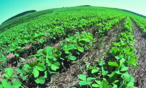 Determining the parameters of manure distribution for optimal uniformity