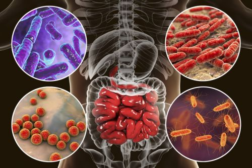 Researchers develop way to alter intestinal microbiota, vaccinate against inflammatory diseases