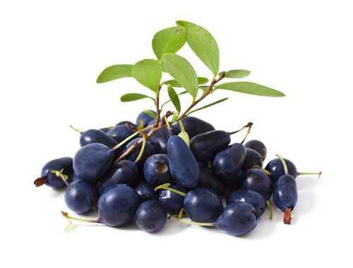 Not just carrots: Study shows that bog bilberry can protect your eyes against blue light emitted by electronic devices