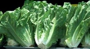 Not it: Grocery stores, school say they don't have the romaine