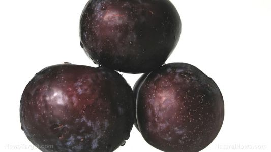 Scientists look to the common plum as a potential natural remedy for cancer
