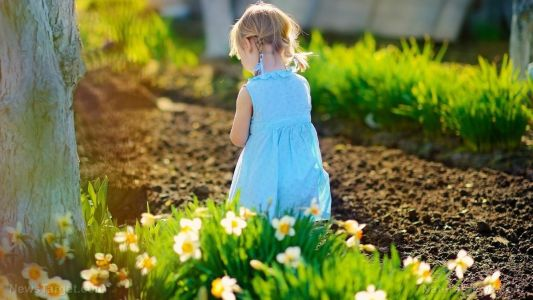 Natural alkaloids extracted from daffodils discovered to have anti-cancer effects