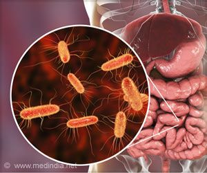 Anti-inflammatory Protein Boosts Healthy Gut Bacteria to Fight Obesity, Diabetes