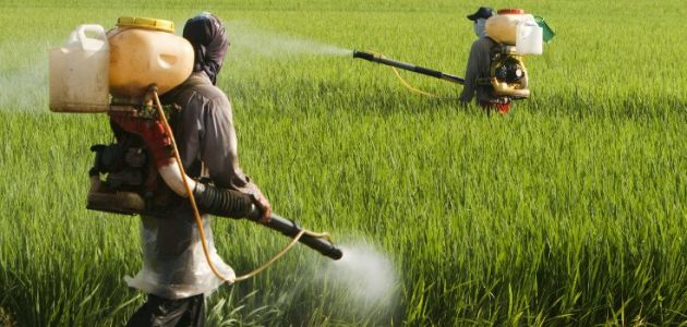 Total corruption: Government regulators relied on industry-funded herbicide studies to declare glyphosate safe
