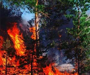 Prenatal Forest Fire Exposure Can Cause Stunting in Children