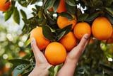 12 Foods That Can Help Naturally Boost Your Intake of Vitamin C
