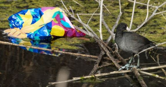 18,000 Pieces Of Ballon Waste Found In The Great Lakes