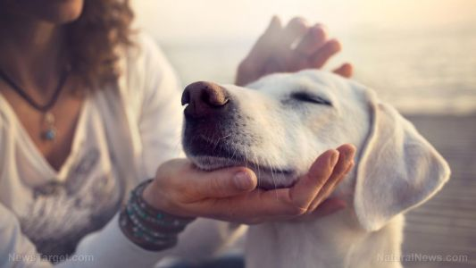 The truth about pet cancer and the epidemic that no one talks about