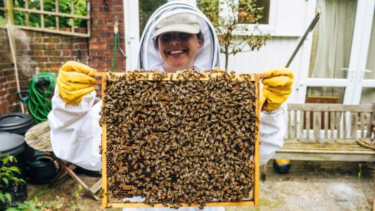 Bee populations beginning to thrive as coronavirus lockdowns result in better environments due to fewer cars and less air pollution