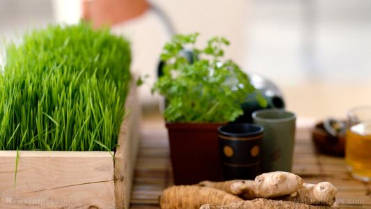 Herbs to help you age gracefully: Support for the brain, heart, digestion, and more