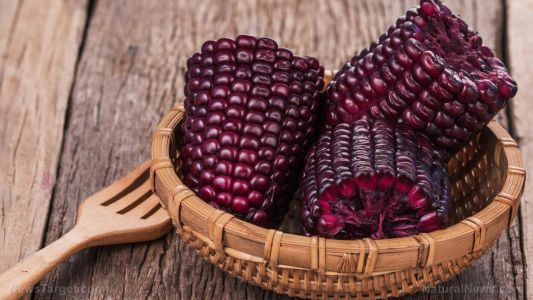 Purple corn found to improve libido in males