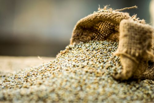 Brazil's next big grain? Researchers propose pearl millet as an alternative grain to rice and maize