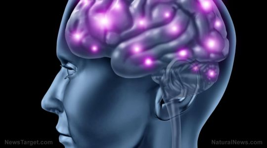 How fasting boosts brain power