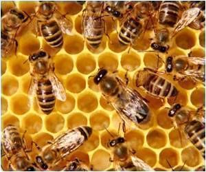 Honey Bees Hold Promise to Fight Cancer, Reduce Aging