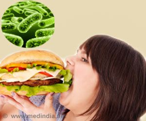 How Do Small Intestinal Bacteria Absorb Fat and Increase Obesity Risk?