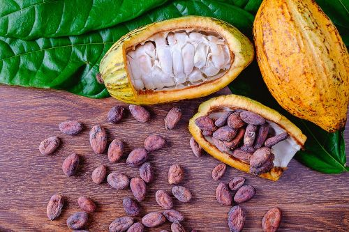 'Provocative': Cocoa flavonoids may improve mobility & quality of life for older people