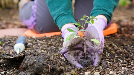 Gardening hacks: High-yield strategies to make the most out of your space