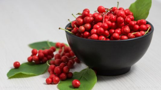 Your liver loves schisandra extract: Research shows these berries reduce risk of NAFLD, liver dysfunction