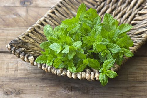 Spearmint's antibacterial properties prove useful against food-borne pathogens