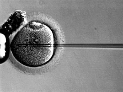 Who Will Be The First To Sue A Fertility Treatment Centre For Weight Discrimination?