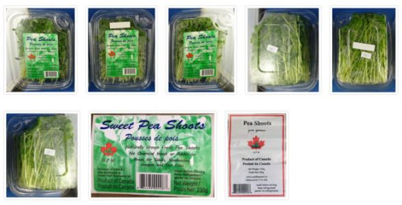Pea shoots recalled after positive test result for Listeria contamination